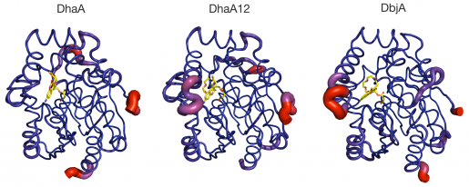 Dynamics and Hydration Explain Failed Functional Transformation in Dehalogenase Design